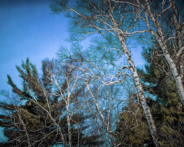 Poster featuring the photograph Haunted Trees by Chroma Photographer