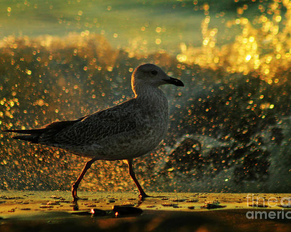 Seagull Poster featuring the photograph Have A Walk By Th Sea by Angel Ciesniarska