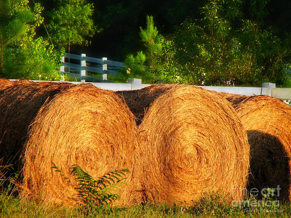 Landscape Poster featuring the photograph Hay Bales by Todd Blanchard