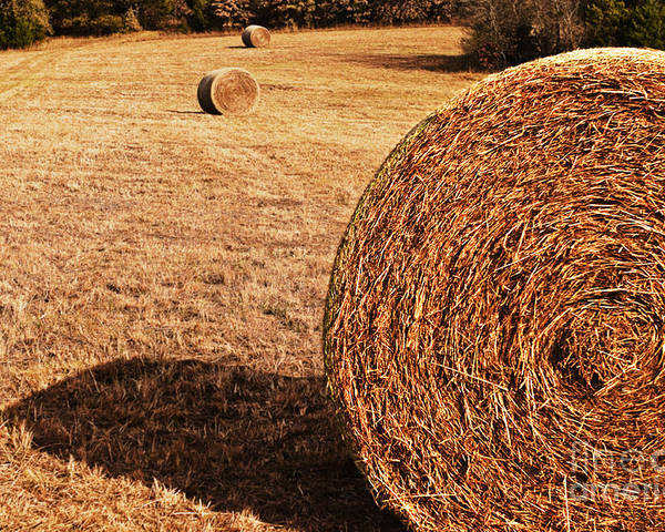 Nature Poster featuring the photograph Hay In The Field by Tamyra Ayles