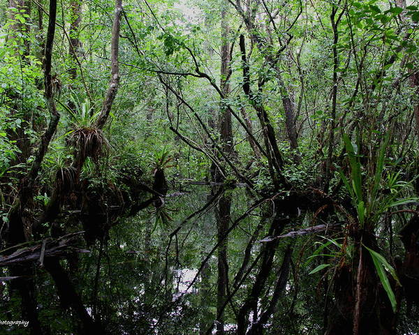 Swamp Poster featuring the photograph Heart Of The Swamp by Barbara Bowen