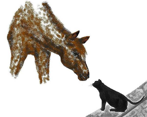 Horses Poster featuring the digital art Hello Down There by Carole Boyd