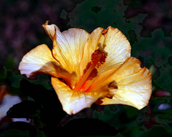 Nature Poster featuring the photograph Hibiscus Heat by David Houston