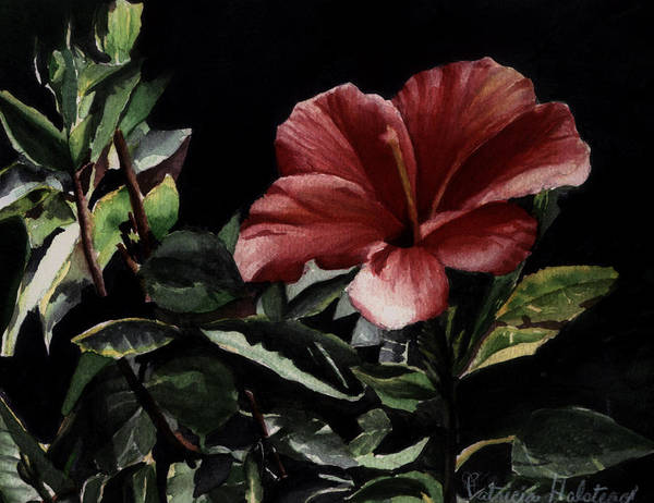 Watercolor Poster featuring the painting Hibiscus by Patricia Halstead