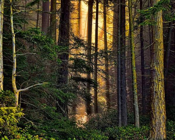 Forest Poster featuring the photograph Hidden In The Forest by Rick Lawler