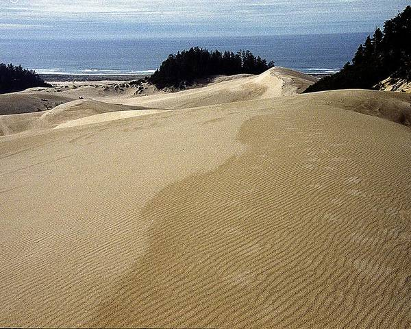Oregon Dunes National Recreation Area Poster featuring the photograph High Dunes 2 by Eike Kistenmacher