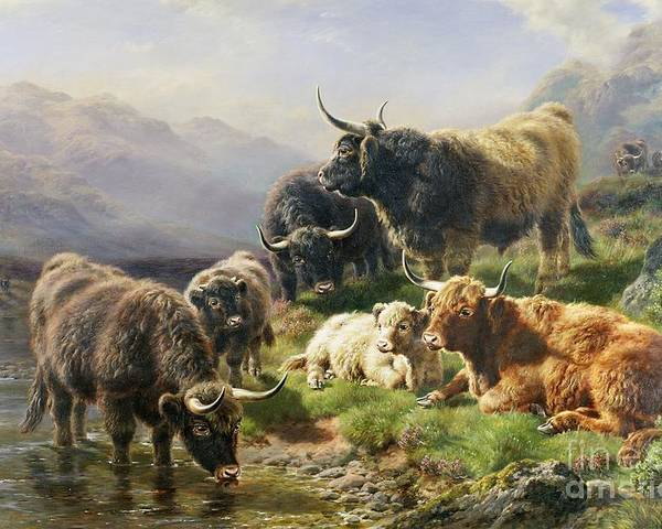Highland Poster featuring the painting Highland Cattle by William Watson