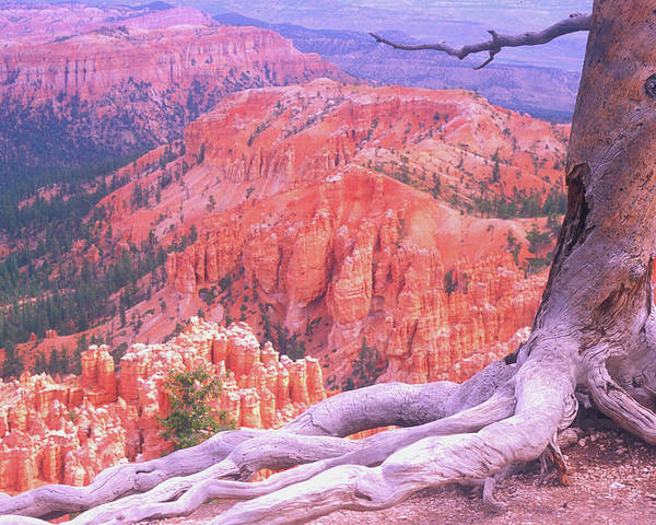 Utah Poster featuring the photograph Holding On by Dave Hampton Photography