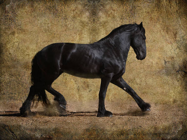 Stallion Poster featuring the photograph Hooves Of Thunder by Jean Hildebrant