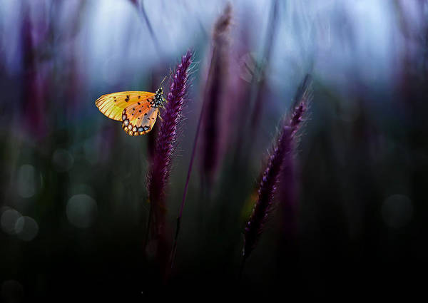 Macro Poster featuring the photograph Hope by Erwin Astro