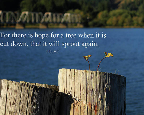 Inspirational Poster featuring the photograph Hope For A Tree by James Eddy