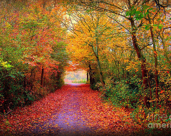 Autumn Poster featuring the photograph Hope by Jacky Gerritsen