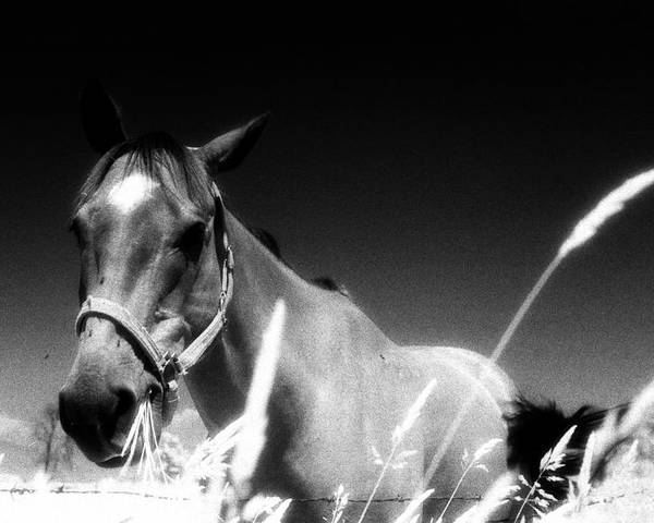 Abstract Poster featuring the photograph Horse At The Fence by Lyle Crump