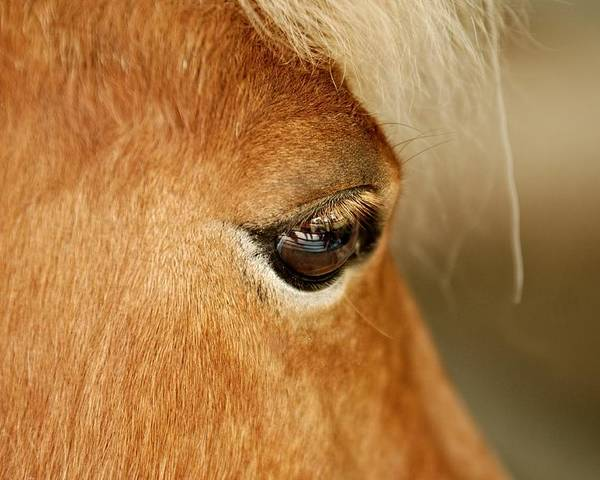 Horse Poster featuring the photograph Horse Eye by Larry Jost