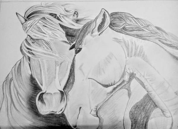 Poster featuring the drawing Horse Pair by Anirudh Maheshwari