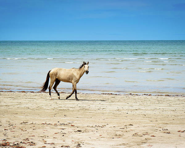 Horizontal Poster featuring the photograph Horse Walking On Beach by Vitor Groba