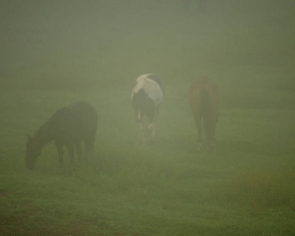 Cade Poster featuring the photograph Horses Grazing In The Mist by Steve Gadomski