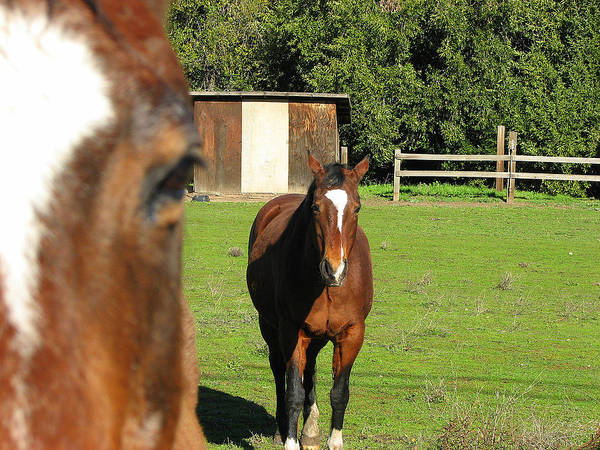 Horse Poster featuring the photograph Horses by Kathy Roncarati