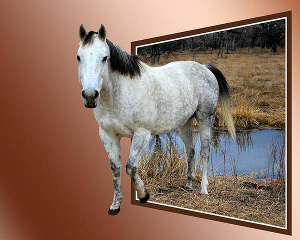 Horse Poster featuring the photograph Horsing Around by Shane Bechler