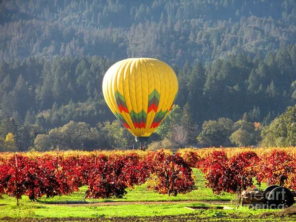 Hot Air Balloon Poster featuring the photograph Hot Air In The Valley by Gail Salituri