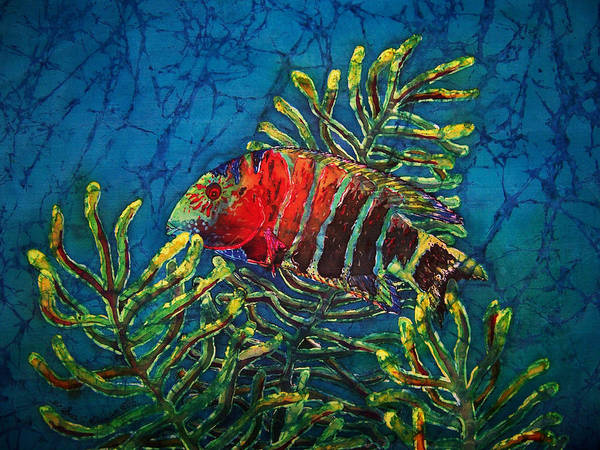 Fish Poster featuring the painting Hovering - Red Banded Wrasse by Sue Duda