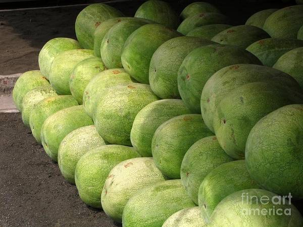 Huge Poster featuring the photograph Huge Watermelons by Yali Shi