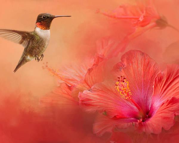 Jai Johnson Poster featuring the photograph Hummingbird And Peach Hibiscus by Jai Johnson