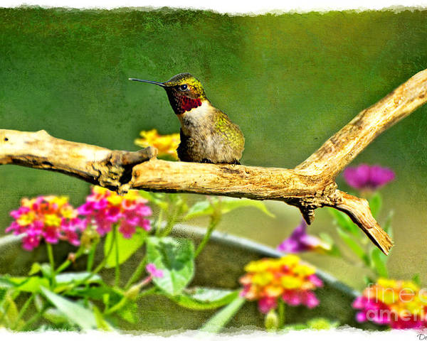 Nature Poster featuring the photograph Hummingbird Attitude by Debbie Portwood