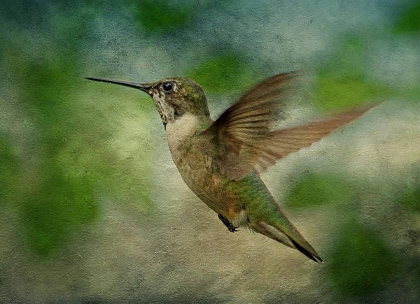 Hummingbird Poster featuring the photograph Hummingbird In Flight II by Sandy Keeton