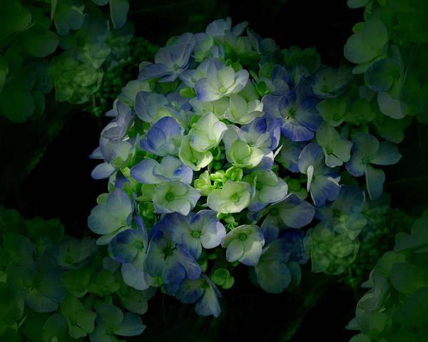 Blue Hydrangea Flower Poster featuring the photograph Hydrangea - Flowers by Kathleen Sartoris