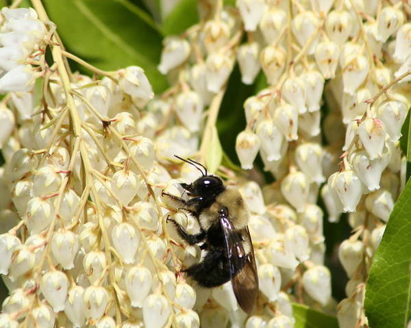 Honey Poster featuring the photograph I Work So Hard For The Honey by Paul SEQUENCE Ferguson       sequence dot net