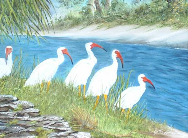 Birds Poster featuring the painting Ibis by Dennis Vebert