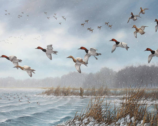 Canvasbacks Poster featuring the painting Ice Cold Cans by Guy Crittenden