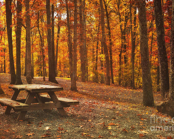 Fall Poster featuring the photograph In The Park by Kathy Jennings