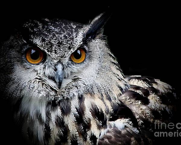 Eagle Owl Poster featuring the photograph Intensity by Clare Bevan