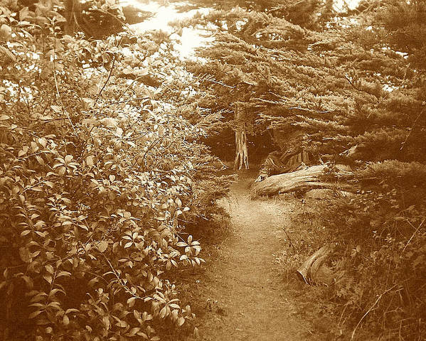 Woodscape Poster featuring the photograph Into The Woods Sepia by Maggie Cruser