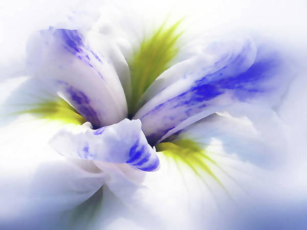 Flowers Poster featuring the photograph Iris Spring by Jessica Jenney