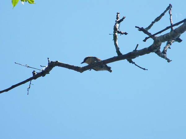 Bird In The Branch Poster featuring the photograph Is A Bird by Nereida Slesarchik Cedeno Wilcoxon