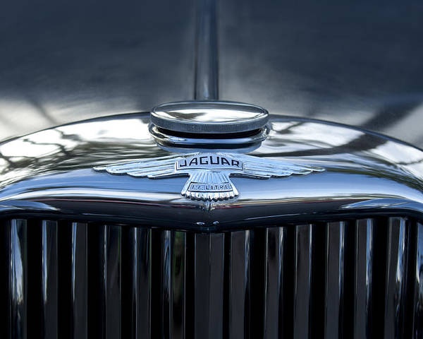 Jaguar Poster featuring the photograph Jaguar Hood Ornament by Jill Reger