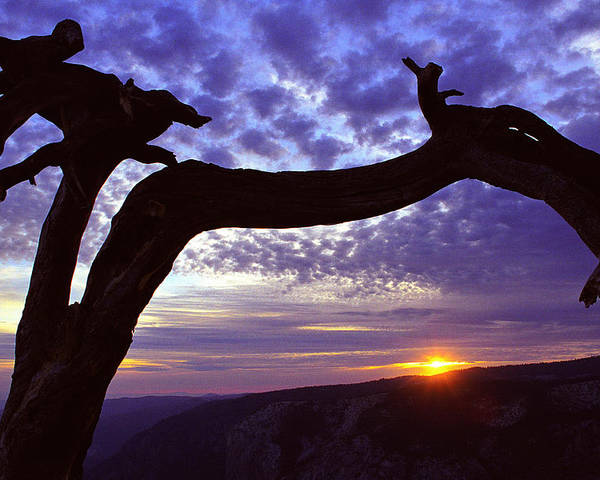 Jeffrey Pine Poster featuring the photograph Jeffrey Pine Sentinel Dome by Alan Lenk