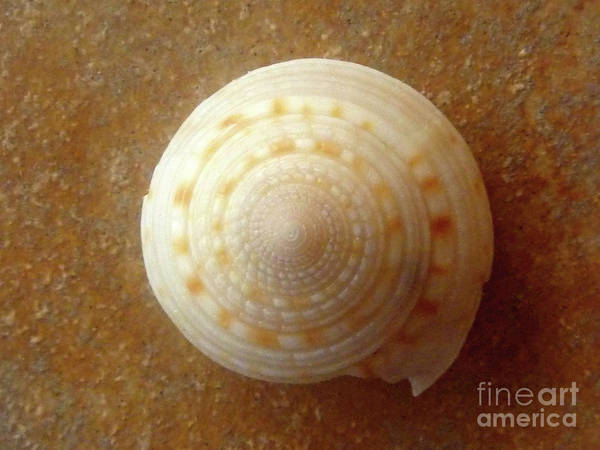 Nature Poster featuring the photograph Jewels Of The Sea - Tiger's Eye Swirl by Lucyna A M Green