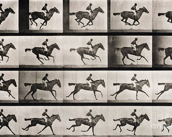 Muybridge Poster Featuring The Photograph Jockey On A Galloping Horse By Eadweard