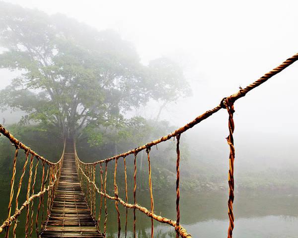Jungle Journey Poster By Skip Nall