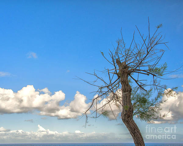 Tree Poster featuring the photograph Just Trying To Survive by White Stork Gallery