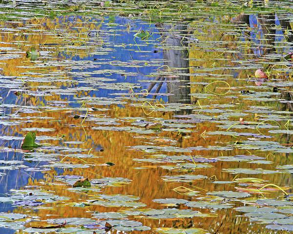 Kaloya Pond Poster featuring the photograph Kaloya Pond Autumn by Darrel Giesbrecht