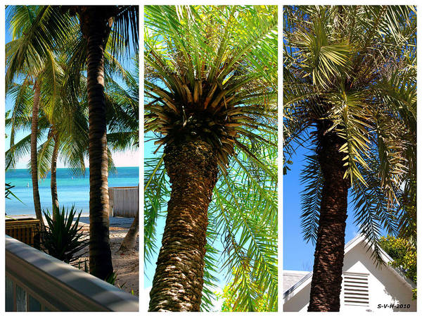 Palm Triplets Poster featuring the photograph Key West Palm Triplets by Susanne Van Hulst