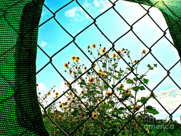 Wildflowers Poster featuring the photograph Keyhole by Chuck Taylor