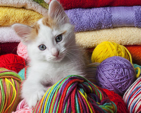 White Poster featuring the photograph Kitten In Yarn by Garry Gay