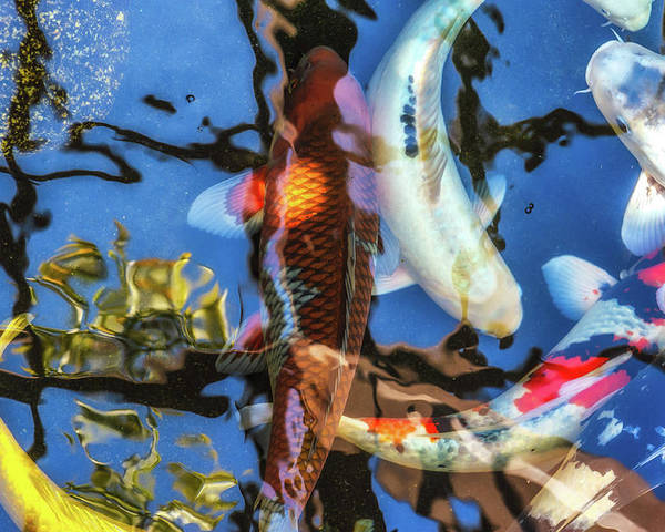 Koi Poster featuring the photograph Koi Pond by Alexander Kunz