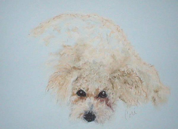 Dog Poster featuring the drawing Kuku by Cori Solomon